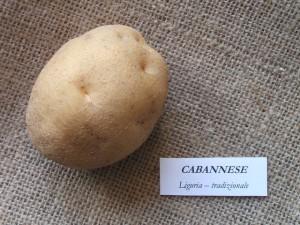 cabannese