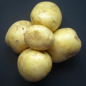 elfe patata