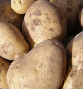 patate majestic